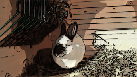 White rabbit in the cage on dry grass Animation