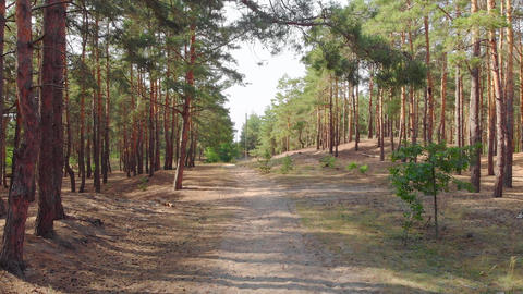 Footpath In Forest Live Action