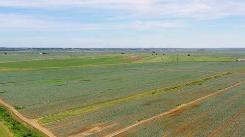 Agricultural land with green crops from above Live Action