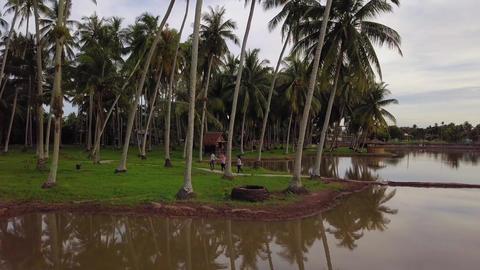 Aerial view Malays tourist visit at coconut plantation eco tourism Live Action