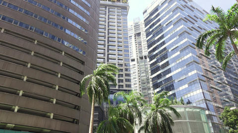 Office Skyscrapers and Palm Trees on a Sunny Day. HD Live Action