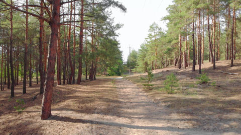 Pine Forest Footpath Live Action