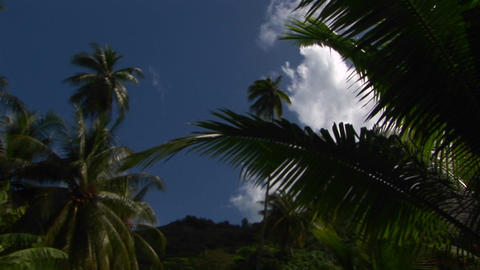 A low angle shot of tropical jungle foliage and blue sky Stock Video Footage