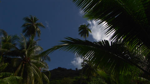 A Low Angle Shot Of Tropical Jungle Foliage And Blue Sky stock footage