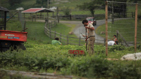 Laborers work in an agricultural field Stock Video Footage