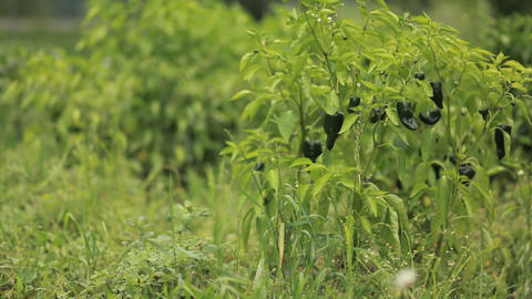 Green grass and foliage grows outdoors Stock Video Footage