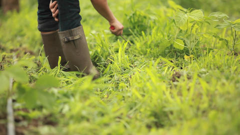 A person works in the garden wearing galoshes Stock Video Footage