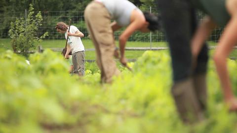 People work in a community garden Stock Video Footage