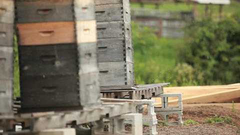 Beekeeper boxes in a garden Stock Video Footage