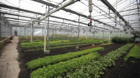 Soft focus shot of the interior of a greenhouse Stock Video Footage
