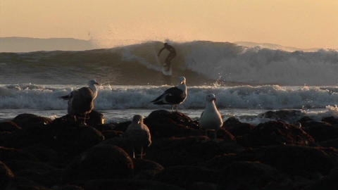 Surfers ride waves behind a seagulls Footage