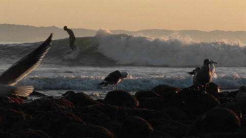 Surfers ride waves behind a seagulls Stock Video Footage