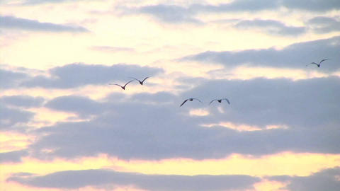 Zoom-out of a flock of birds flying over Kampala, Uganda Stock Video Footage