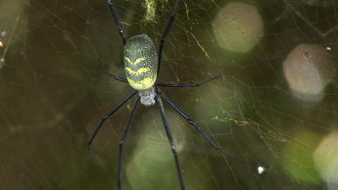 A large spider hangs in its web Stock Video Footage