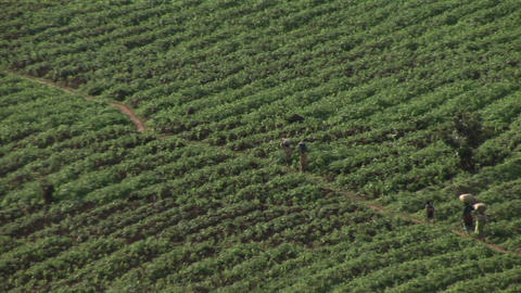Birds-eye view of African farmers walking across a field on the border between Rwanda and Uganda Footage