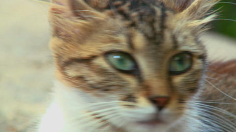 A cat with green eyes looks around Footage