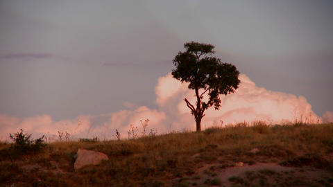 Large thunder clouds are time lapsed behind a tree Footage
