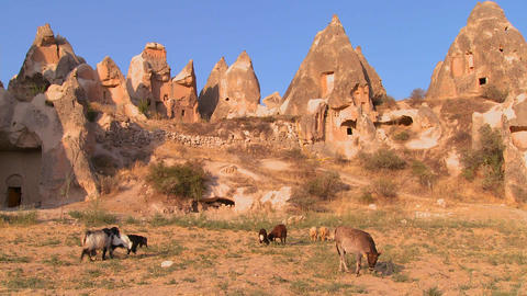 Cows graze in front of bizarre geological formatio Stock Video Footage