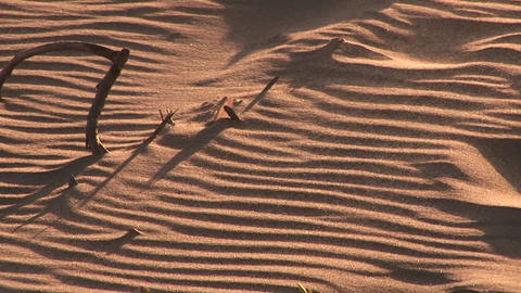 Bones Sticking Out Of The Sand At Sunset stock footage