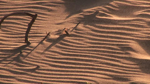 Bones sticking out of the sand at sunset Stock Video Footage