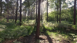 Walk into Sunny Woodland Footage