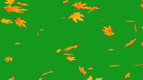 Falling leaves motion graphics with green screen background Animation