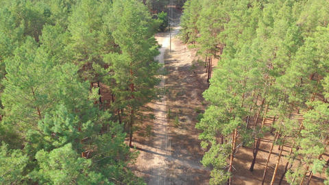 Path In Forest Aerial Live Action