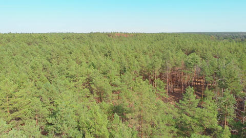 Flight Over The Forest GIF