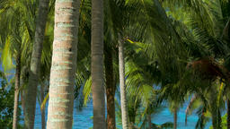 Palm tree grove in front of turquoise lagoon Footage