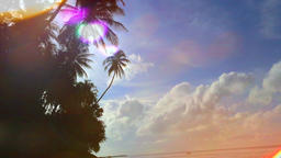 Sunny day on tropical beach with palm tree Footage