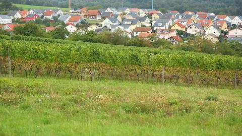 A vineyard in the village Eisingen ビデオ
