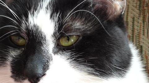 Cat 0
