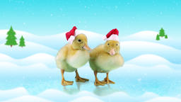 Cute ducklings in Christmas hats standing on the ice, winter day background with Footage