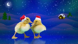 Funny ducklings in red Santa hats sliding on the ice, winter night background wi Footage
