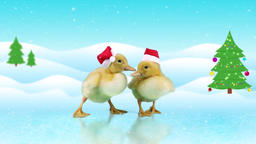 Funny ducklings in red Santa Claus hats sliding on the ice, winter day backgroun Footage