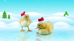 Little newborn ducklings in Santa hats, standing on the ice, winter day backgrou Footage