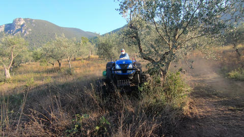 agriculture work in olive fields Live Action