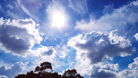 Trees and sky Fotografía