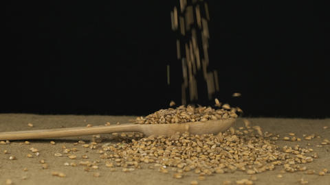 Wheat grains fall into a wooden spoon and heap is poured. Slow motion Live Action