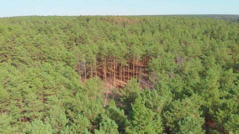 The Aerial Deforestation GIF