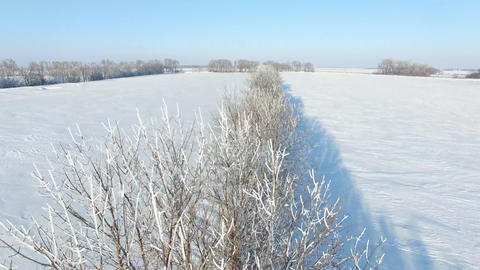 Snowy Field And Frosty Trees Drone Live Action