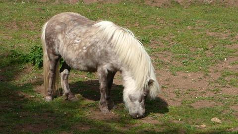 Grazing Pony 0