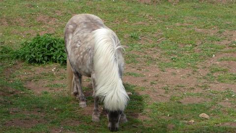 Grazing Pony 1