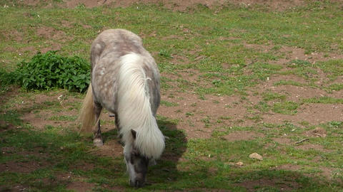 Grazing Pony 2