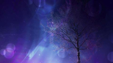 Tree At Night Background CG動画