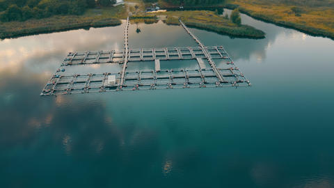 Fish farm in lake - farming enclosures with fresh water where trout, carp or Live Action