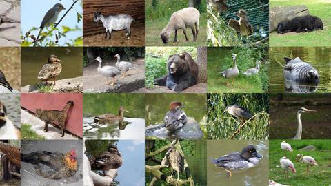 Slide Show Animals 0