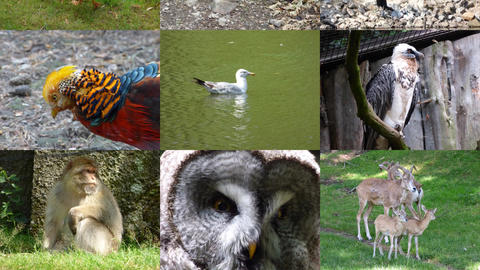 Slide Show Animals 1