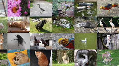 Slide Show Animals 2