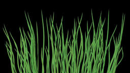 Waving water grass generated seamless loop video with alpha matte Animation